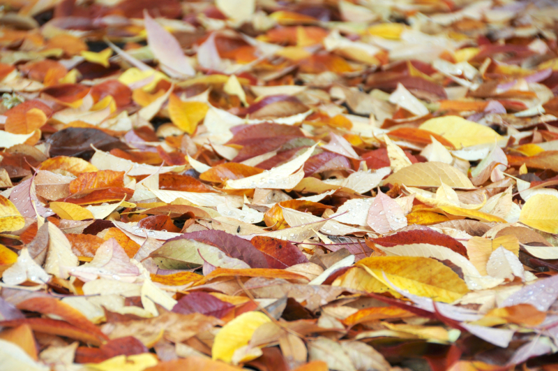 Fall-Leaves (1)