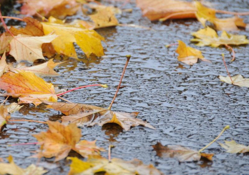 Autumn-Leaves-Ground