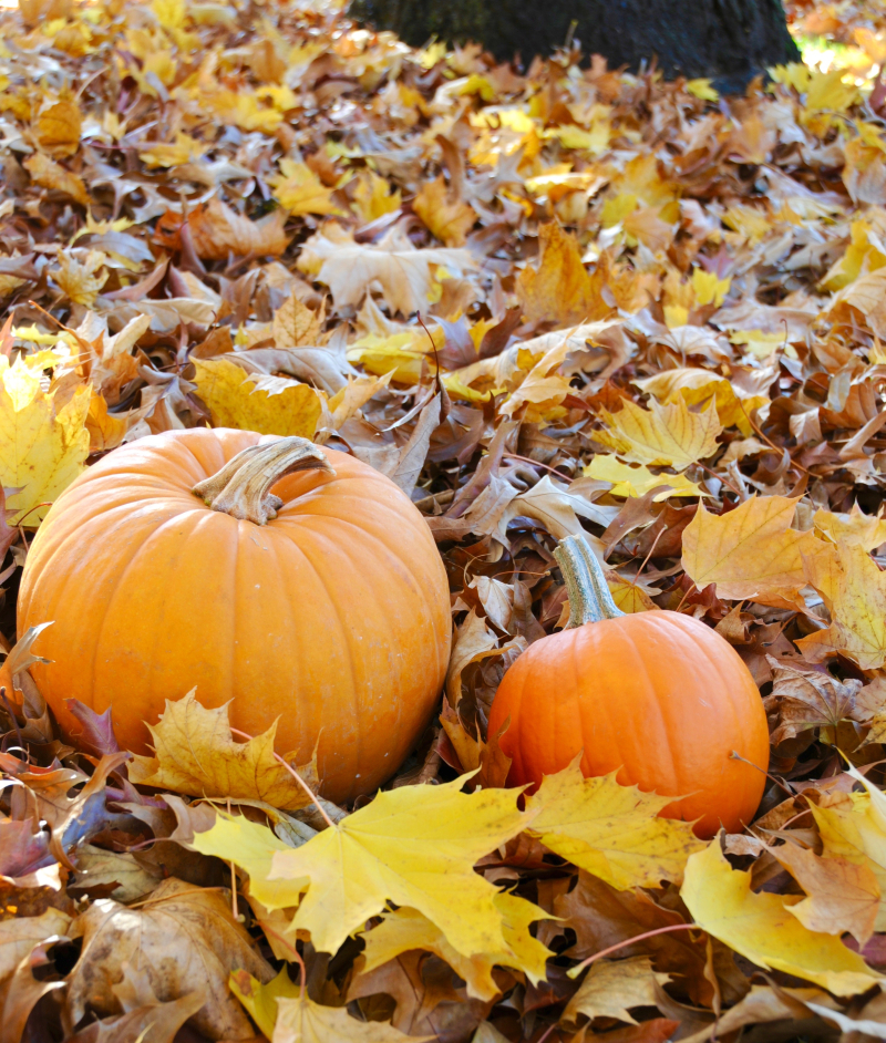 Pumpkins-Fall (1)