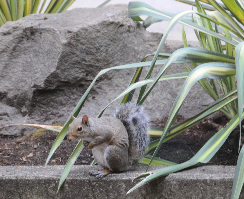 Squirrel-Friends (1)