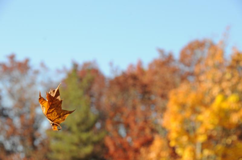 Autumn-Fun-1