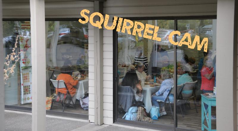 Squirrel-Cam